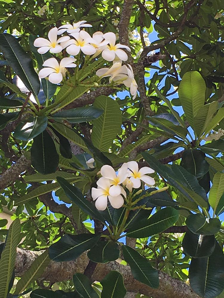 Photo of flowering tree.